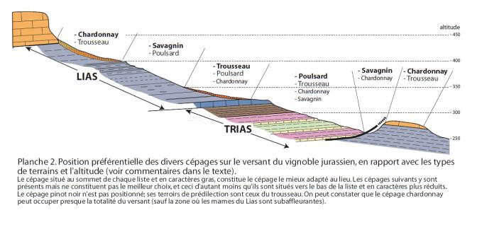 Jura perfil geologico