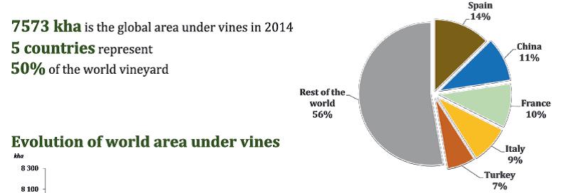 areas de vinhas