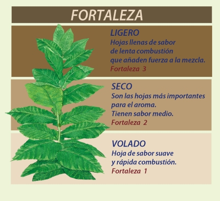tabaco-folha
