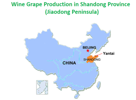 china-wine-region-shandong