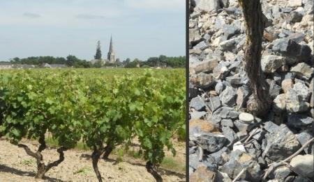 coulle de serrant solos e vinhas
