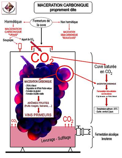 maceração carbonica