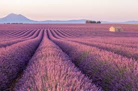 Provence: melhor época, campos de lavanda, passeios e mais | Viagem e  Turismo